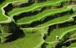 Sawah-Terasering-Subak-Bali-01